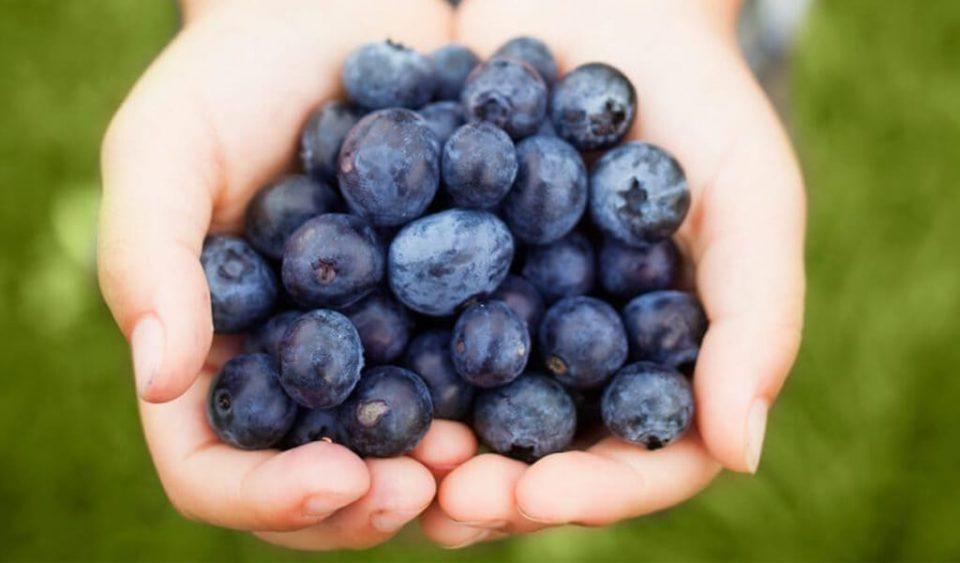 Manfaat Konsumsi Blueberry